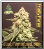 Pot Valley Frosty Purps 6 Female Cannabis Seeds